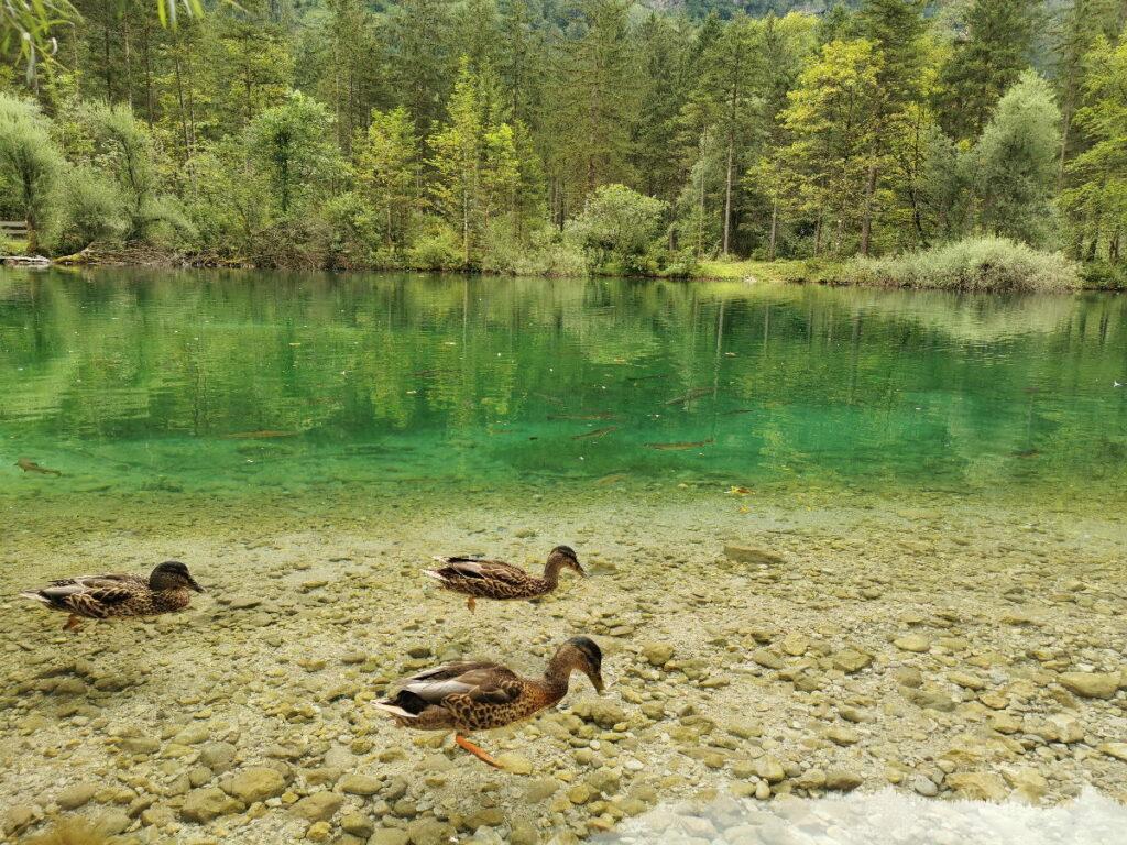 Idyllisch sind die Bluntauseen mit dem glasklaren Wasser, das so herrlich grün glanzt